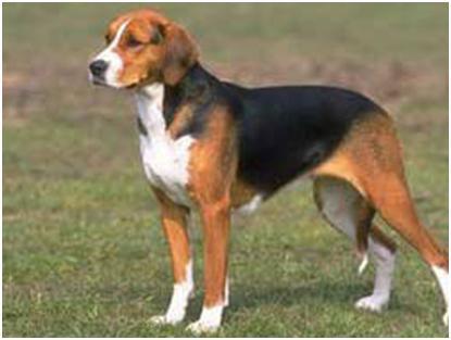 Fotos De Razas de Perros | Fotos de Las Razas de Perros más Conocidas