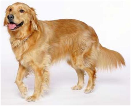 Fotos De Razas De Perros Fotos De Las Razas De Perros Más Conocidas